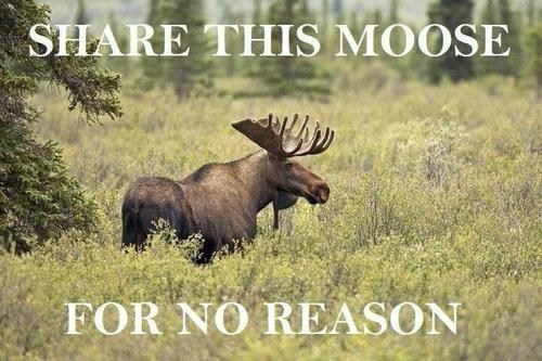 It's a Pretty Cool Moose
