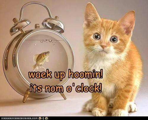 waek up hoomin! its nom o'clock!
