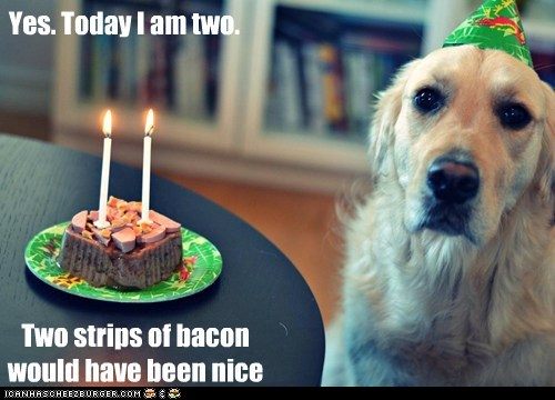 cake,dogs,birthday,candles,golden retriever,hat,bacon