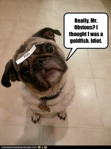 Really, Mr. Obvious? I thought I was a goldfish. Idiot.