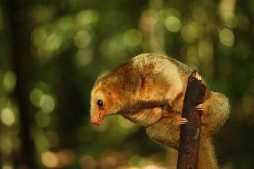 whatsit,teddy bear,Fluffy,sloth,anteater,claws,climbing