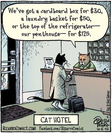 comics,illustrations,bizarro comics,hotels,Cats,boxes,motels,baskets,refrigerators