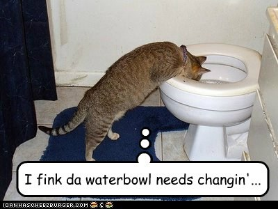 I fink da waterbowl needs changin'...