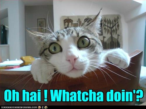 Oh hai ! Whatcha doin'?