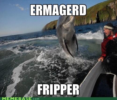 dolphins,Ermahgerd,flipper
