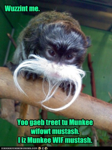 disguise,mustache,monkey,wasnt me