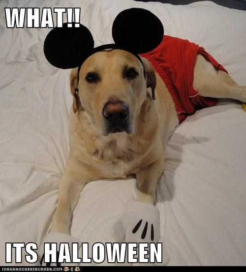 WHAT!!  ITS HALLOWEEN