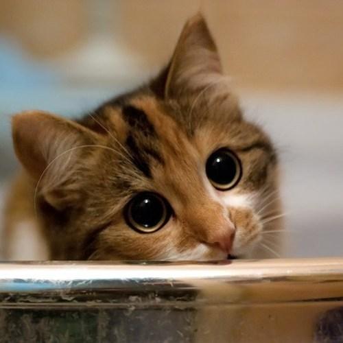 Cats,kitten,cyoot kitteh of teh day,big eyes,eyes,please