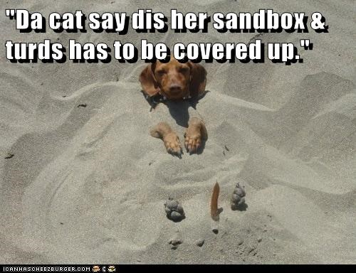 """Da cat say dis her sandbox & turds has to be covered up."""