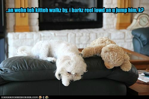 teddy bear,dogs,attack,couch,what breed,Cats,pounce