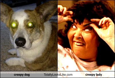 creepy dog Totally Looks Like creepy lady