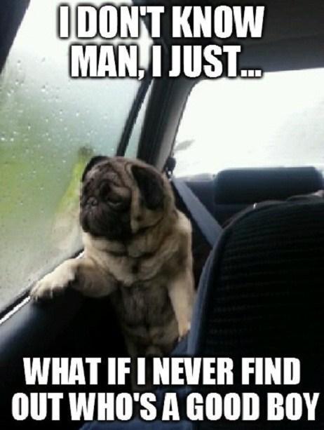 introspective pug,pugs,dogs,cars,Sad,thinking,introspective,good boy,wondering,captions