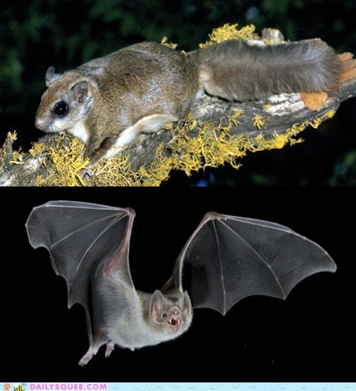 Squee Spree: Flying Squirrel vs. Bat