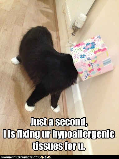 hypoallergenic,fix,captions,help,kleenex,allergy,sneeze,Cats,tissue