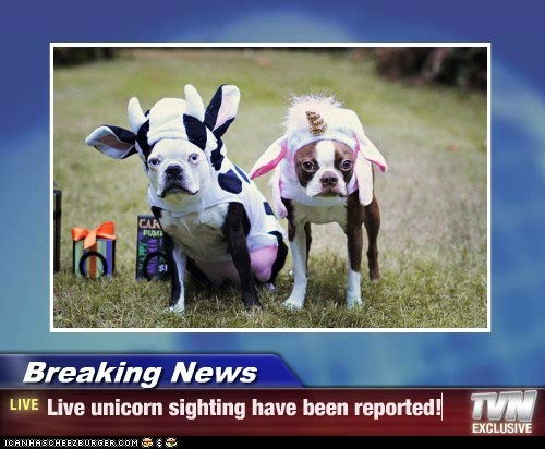 Breaking News - Live unicorn sighting have been reported!