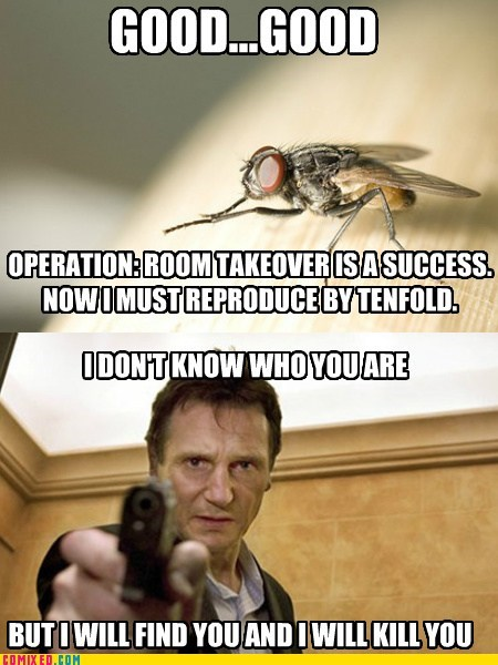 fly infestation,i will find you,liam nesson,i will kill you,taken