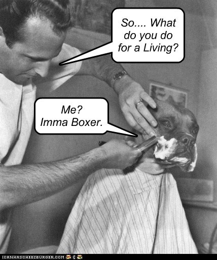 barber,boxer,dogs