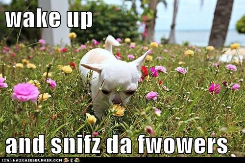 wake up  and snifz da fwowers