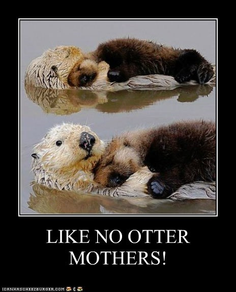 LIKE NO OTTER MOTHERS!