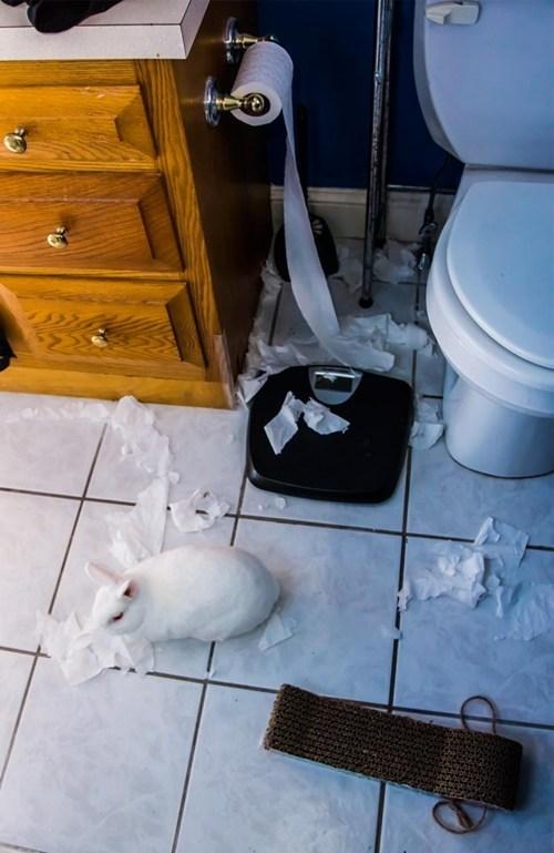 happy bunday,bunny,rabbit,squee,TP,toilet paper,pranks,mess
