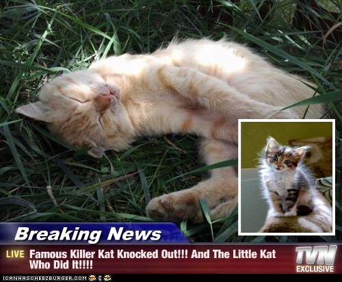 Breaking News - Famous Killer Kat Knocked Out!!! And The Little Kat Who Did It!!!!