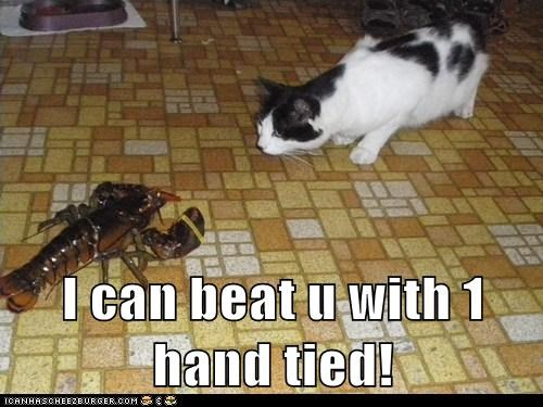 lobster,claw,cat,boasting,tied,rubber band,fighting,prove
