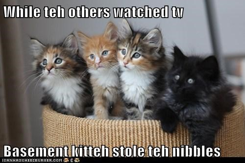 While teh others watched tv  Basement kitteh stole teh nibbles