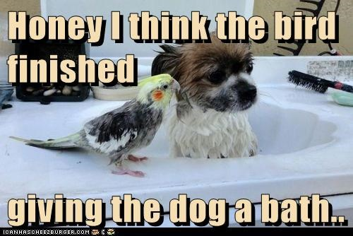 Honey I think the bird finished   giving the dog a bath..