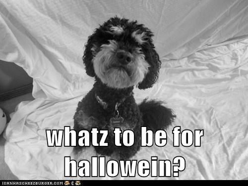 whatz to be for hallowein?