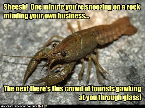 annoyed,tourists,crayfish,restaurant,glass,window