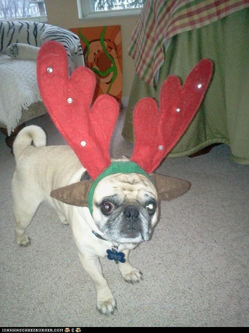 Charlie the Pug-Nosed Reindog