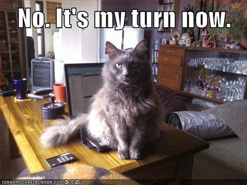 share,turn,internet,me,captions,computer,Cats