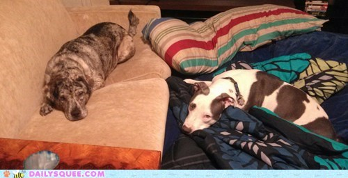 dogs,reader squee,adopted,pet,rescued,squee