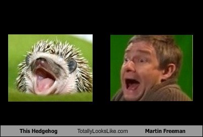 funny,TLL,animal,hedgehog,actor,celeb,Martin Freeman