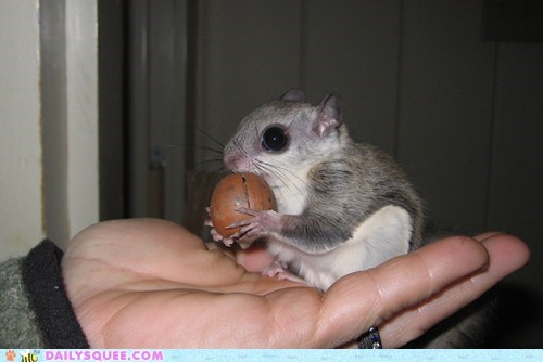 Reader Squee: I Can Has Acorn!