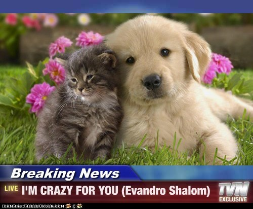 Breaking News - I'M CRAZY FOR YOU (Evandro Shalom)
