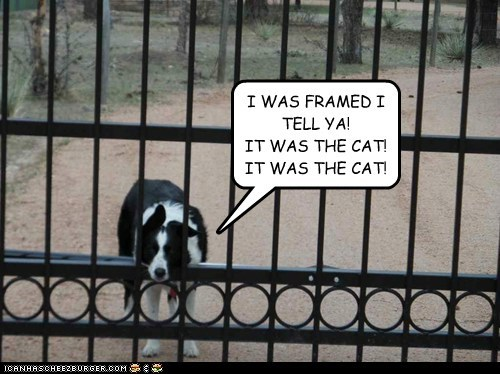 dogs,it was the cat,fence,trapped,framed,what breed