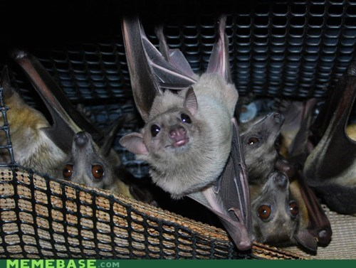 Ridiculously Photogenic Bat
