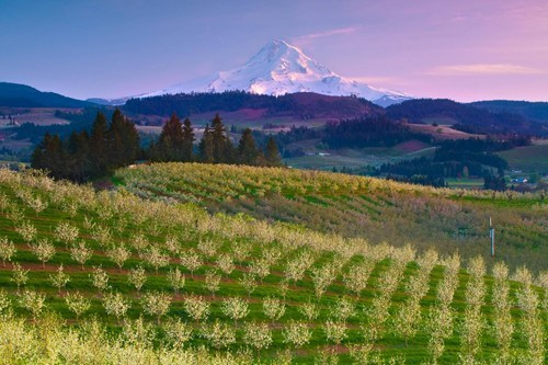 A Colorful View of Mt. Hood, Oregon
