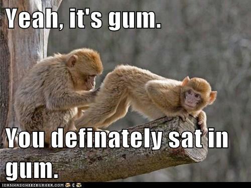 gum,butt,checking,stuck,monkey,sitting
