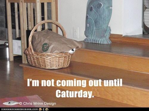 Caturday,basket,hide,Cats,captions