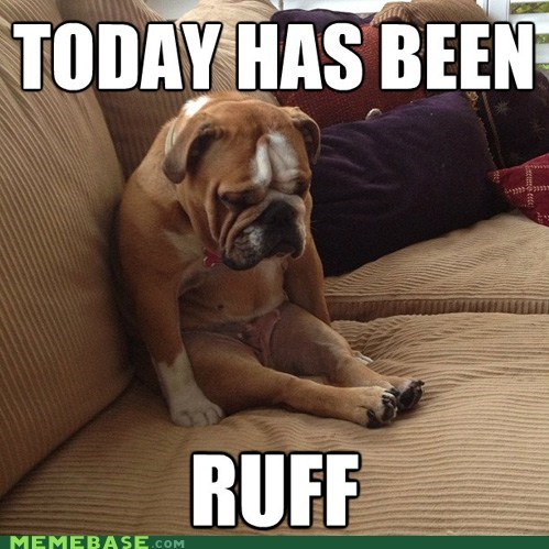 ruff,cuz dogs,day,today,one day,puns