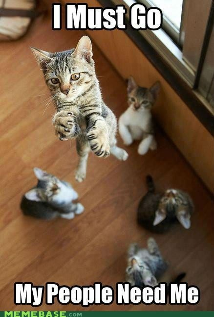 my people need me,i must go,Cats,superman,captions,Memes