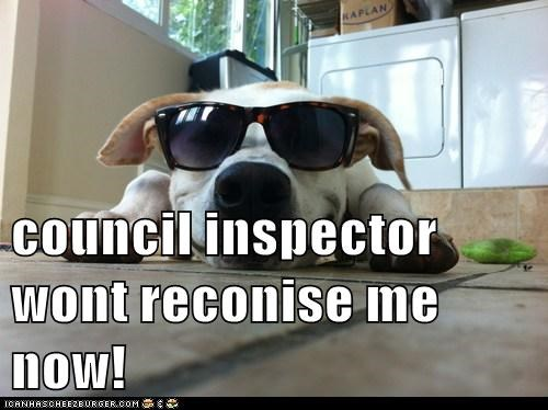 council inspector wont reconise me now!