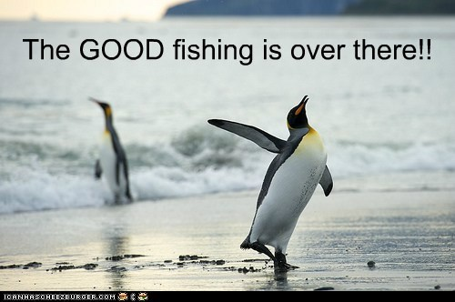 fishing,penguins,snob,advice,over there