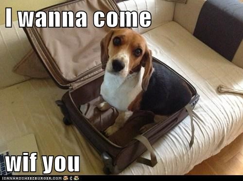 I wanna come  wif you