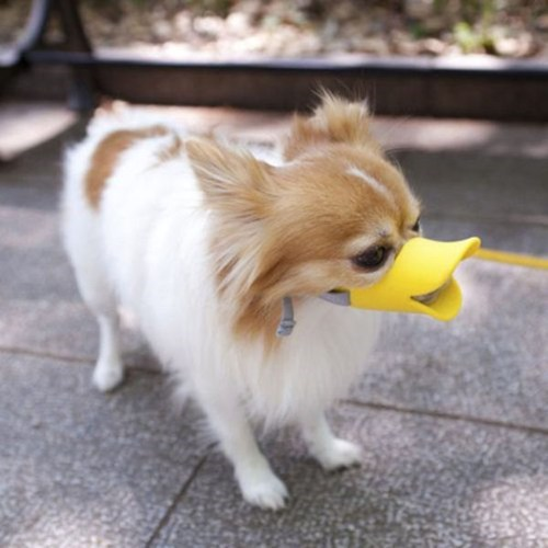 Silly Dog, Duckface is for Teenage Girls
