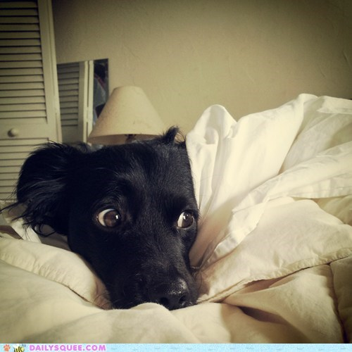 Reader Squee: Do I Have to Get Up?