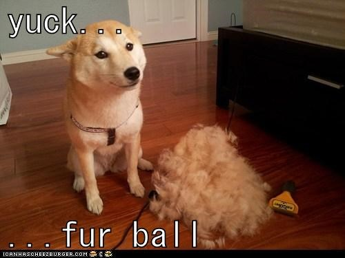 yuck...  ...fur ball