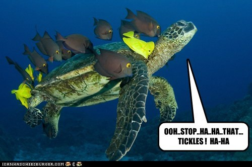 grooming,tickles,turtle,laughing,fish,stop